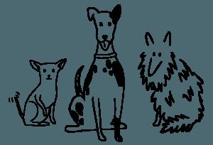 jak powinna wyglądać opieka nad psem