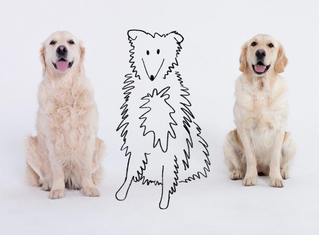 posłuszne psy