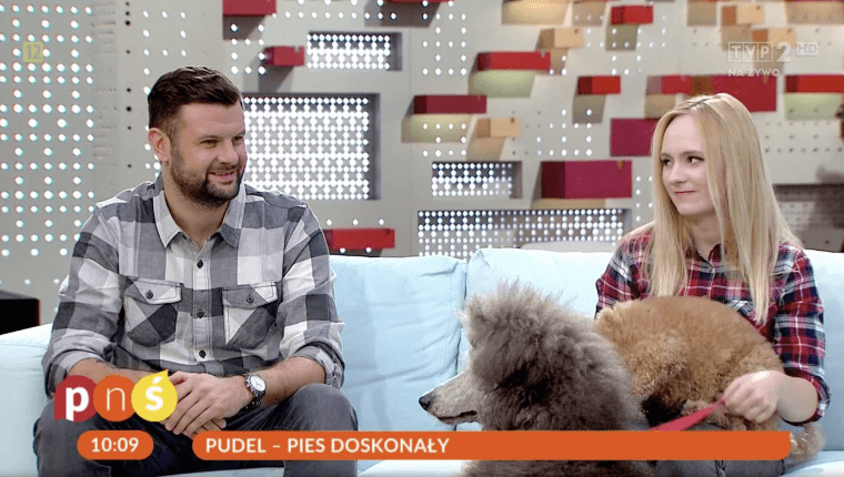 pudel pies doskonały pytanie na śniadanie Piotr Wojtków