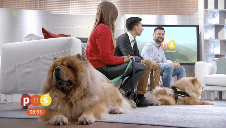 opieka nad psami