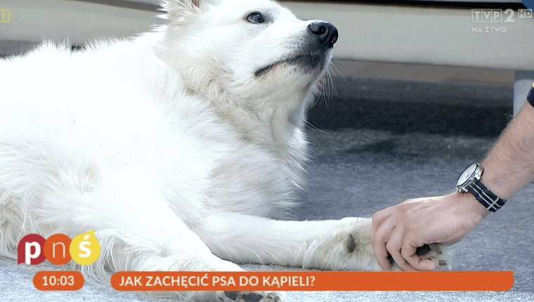 jak zachęcić psa do kąpieli