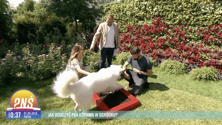 jak oduczyć psa kopania w ogródku Piotr Wojtków