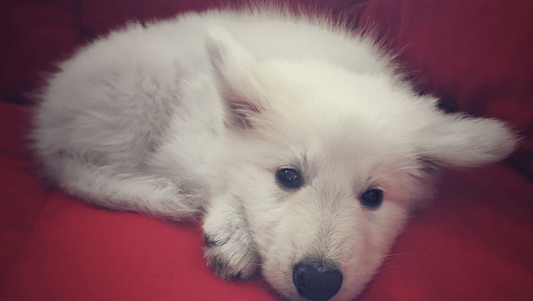 behawiorysta psów kurs