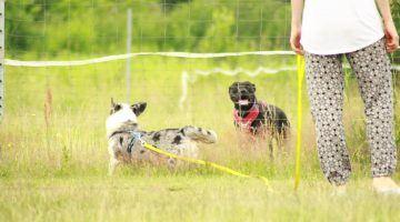 aktywnie spędzany czas z psami