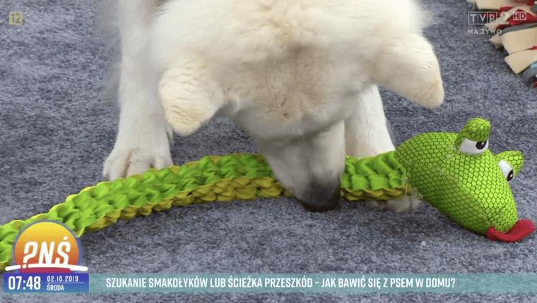 Pies szukanie smakołyków lub ścieżka przeszkód - jak bawić się z psem w domu