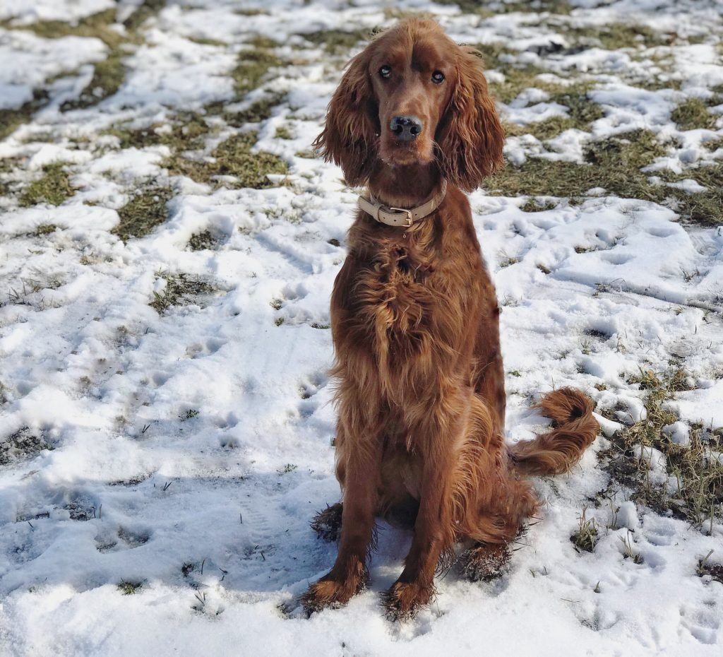 nauka posłuszeństwa u psów