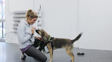 uczenie posłuszeństwa psa